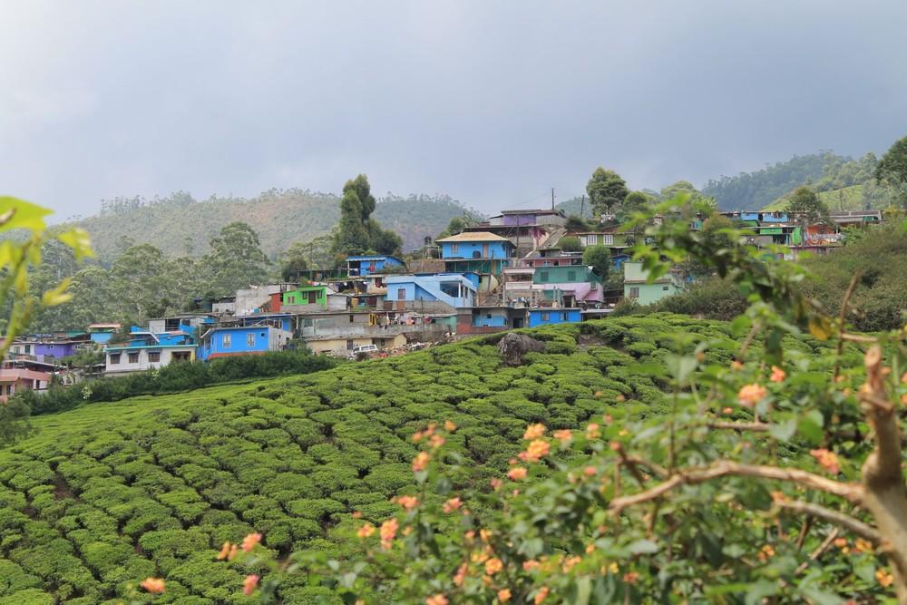 Munnar, Kerala, India.