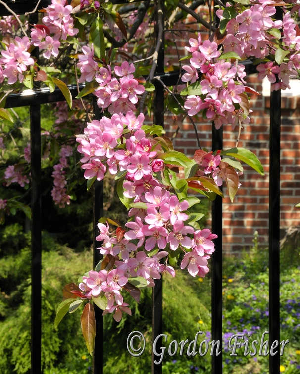 Fence In Spring