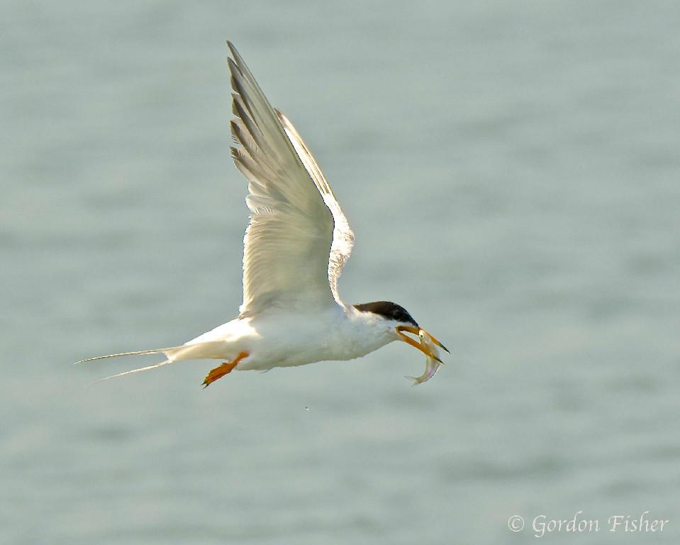 Tern's Take