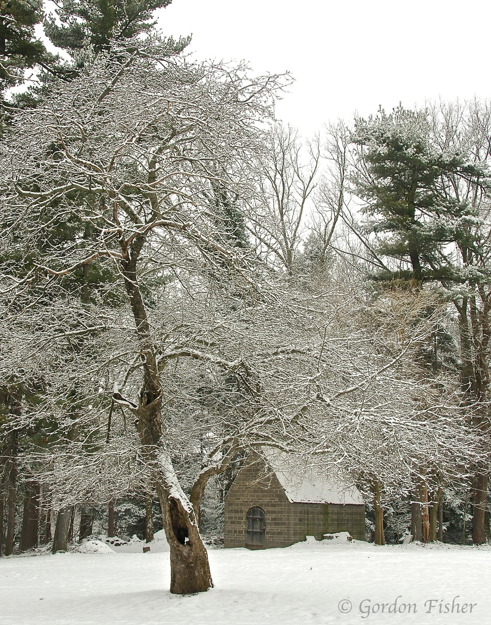 Winter Sanctuary