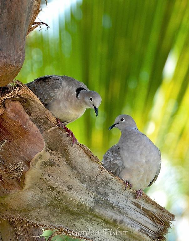 Doting Doves