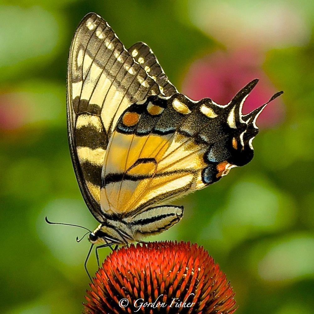 Enjoying Echinacea