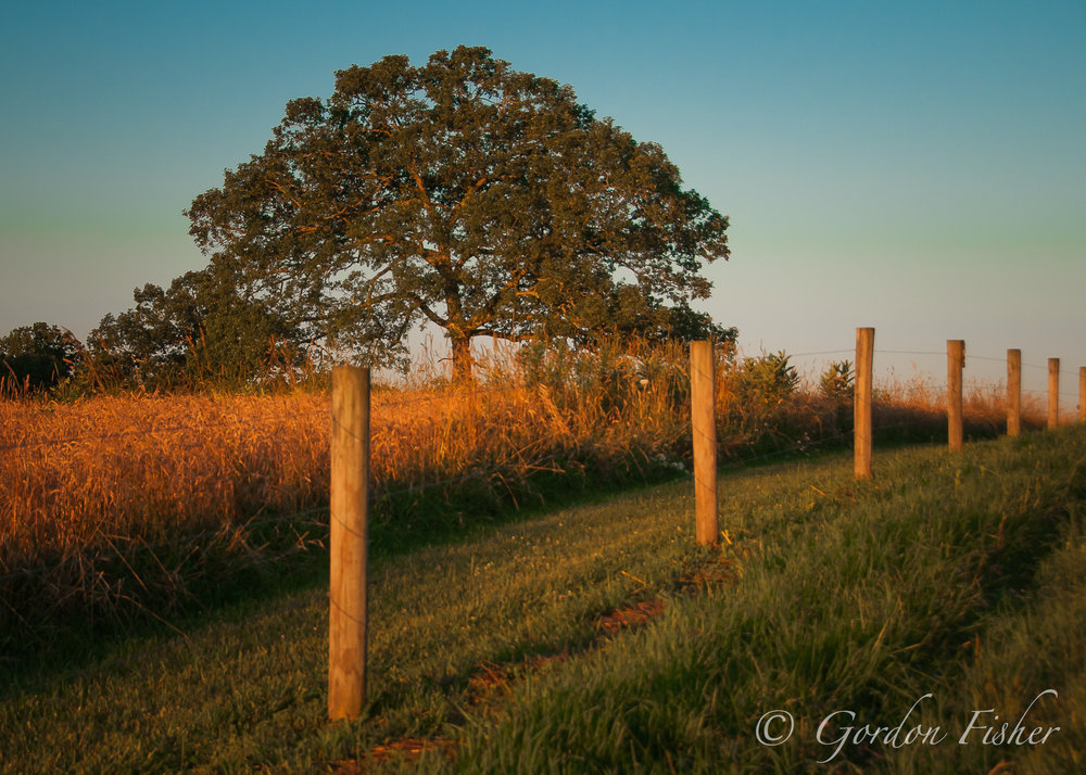Golden Fence Line