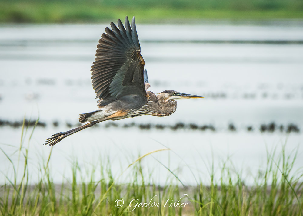 Shoreline Flight