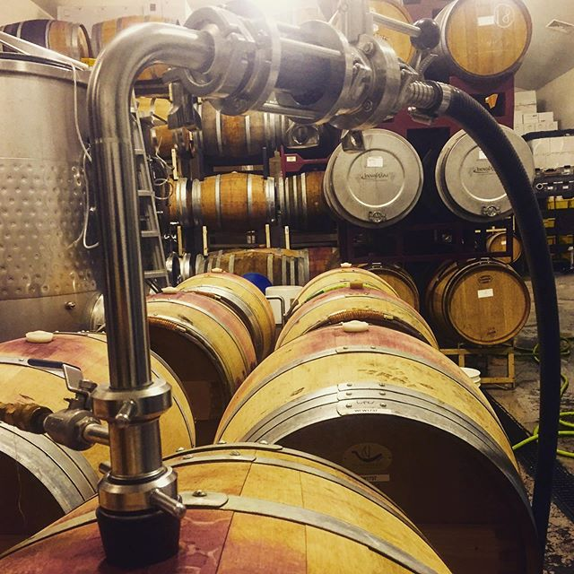 A full cellar as we rack the 2017 Staggerwing Tannat to tank in preparation for bottling.  To say the crew is pumped about the release of our first red wines would be an understatement.  #tannatforlife