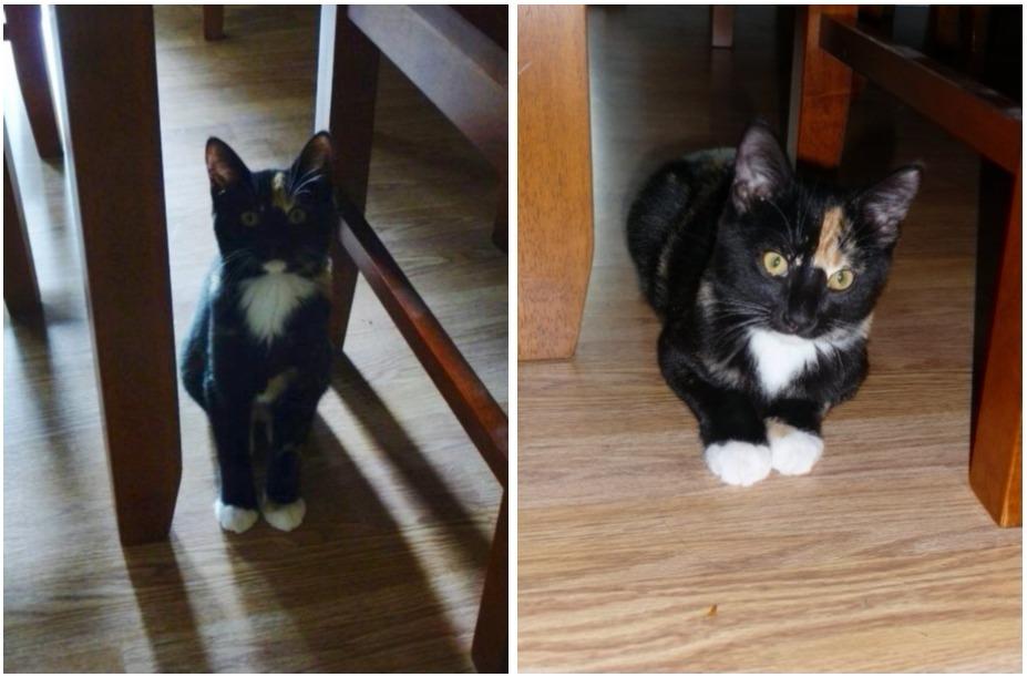 Kitten model