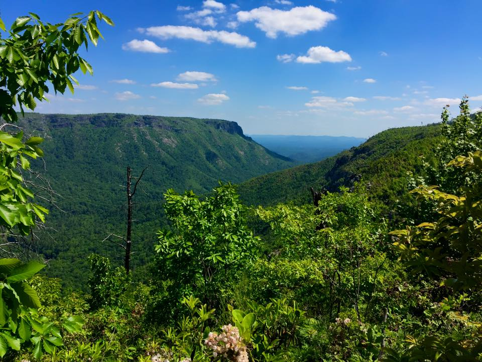 Linville-Gorge-Scott-Whitney-Carlson-May-Hiking.jpg