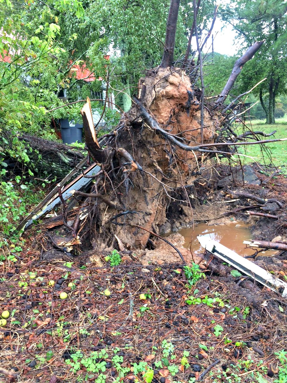 IRMA Storm Damage in Georgia