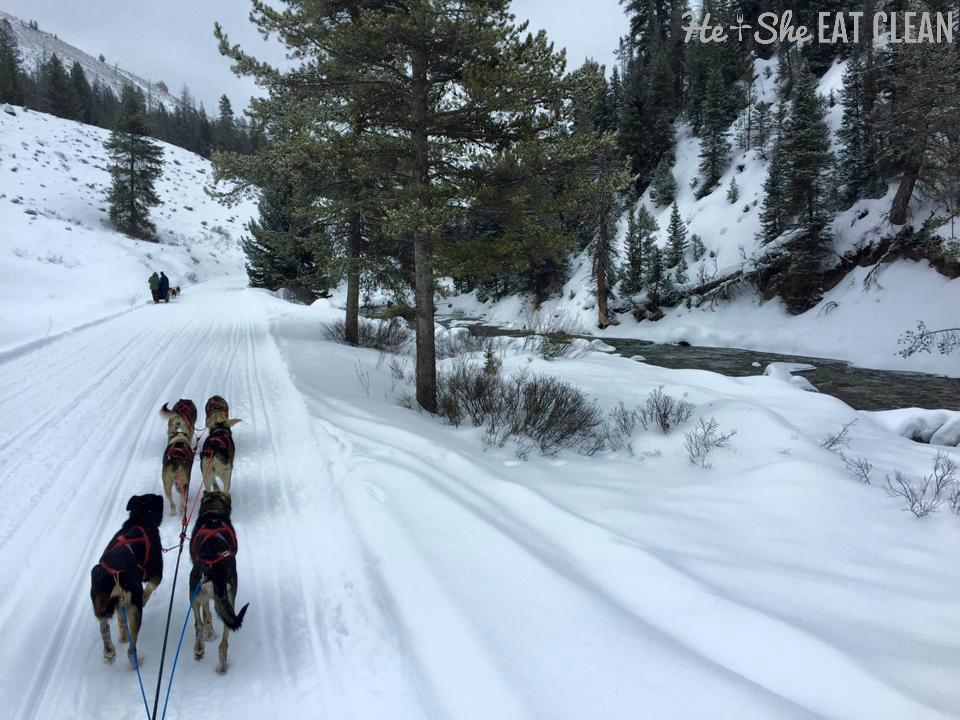 Dog sledding in Jackson, Wyoming