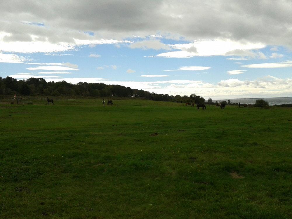 2012-Horses at Spurwink Farm Ocean Side.jpg