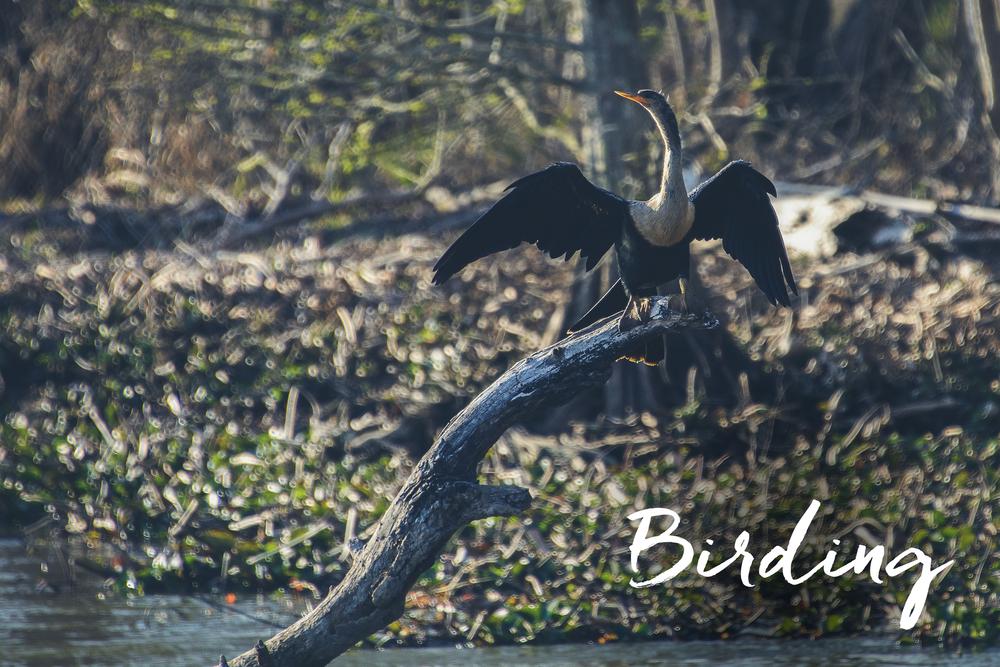 birding.png