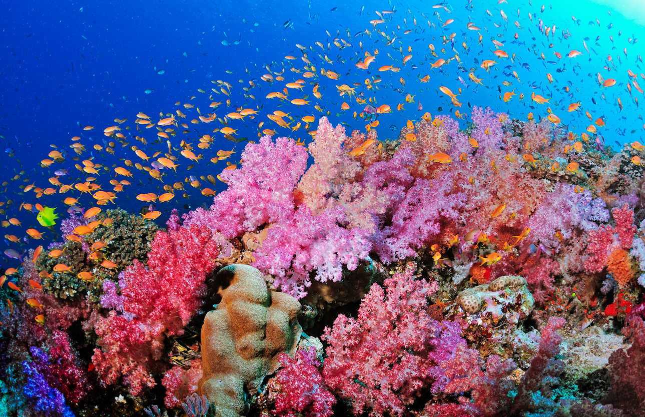 why reefs matter restoring our world s dying reefs