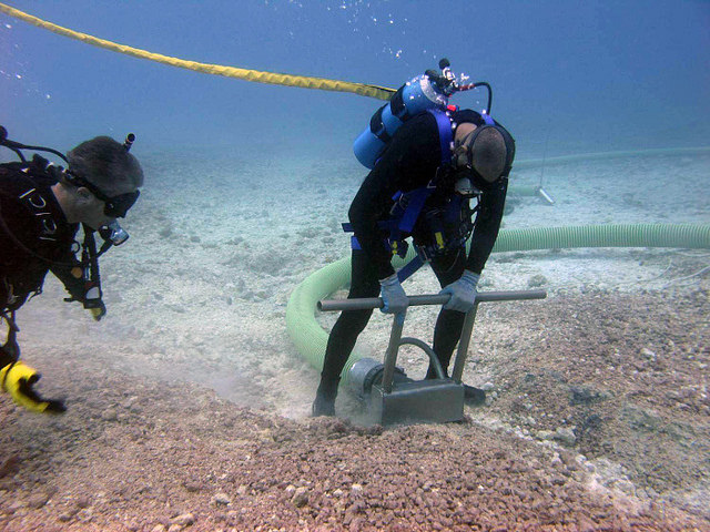 Obtain corals to restore reefs damaged by marine construction or ship groundings