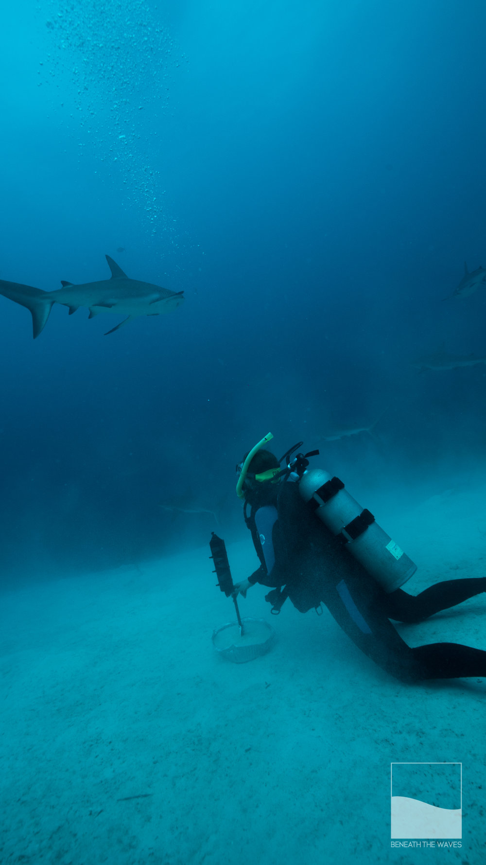 Erica doing science! Deploying receivers to pickup transmissions from any sharks equipped with trackers that come within 500 meters.