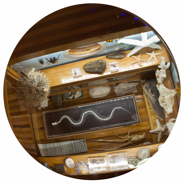 Communibus Locis Interpretive Foundation (CLIF): Mobile  Wunderkammer (Detail: Interior), 2014.