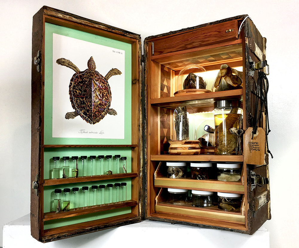 Crude Life Portable Biodiversity Museum for the Gulf of Mexico (Reptile Gallery), Sean Miller in collaboration with Brandon Ballengee, 2017