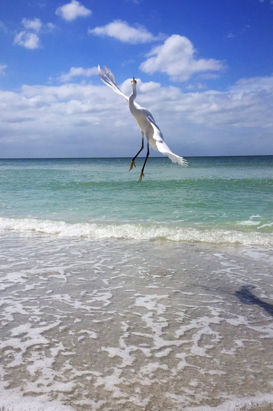 Clearwater Beach bird