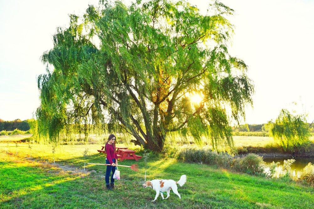 dog-friendly-apple-picking.JPG