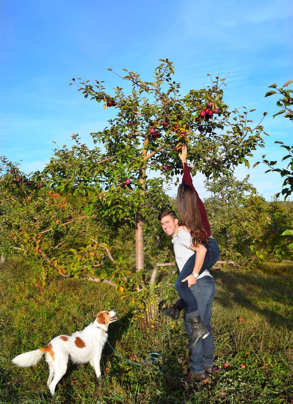 adule-apple-picking-orchard.JPG
