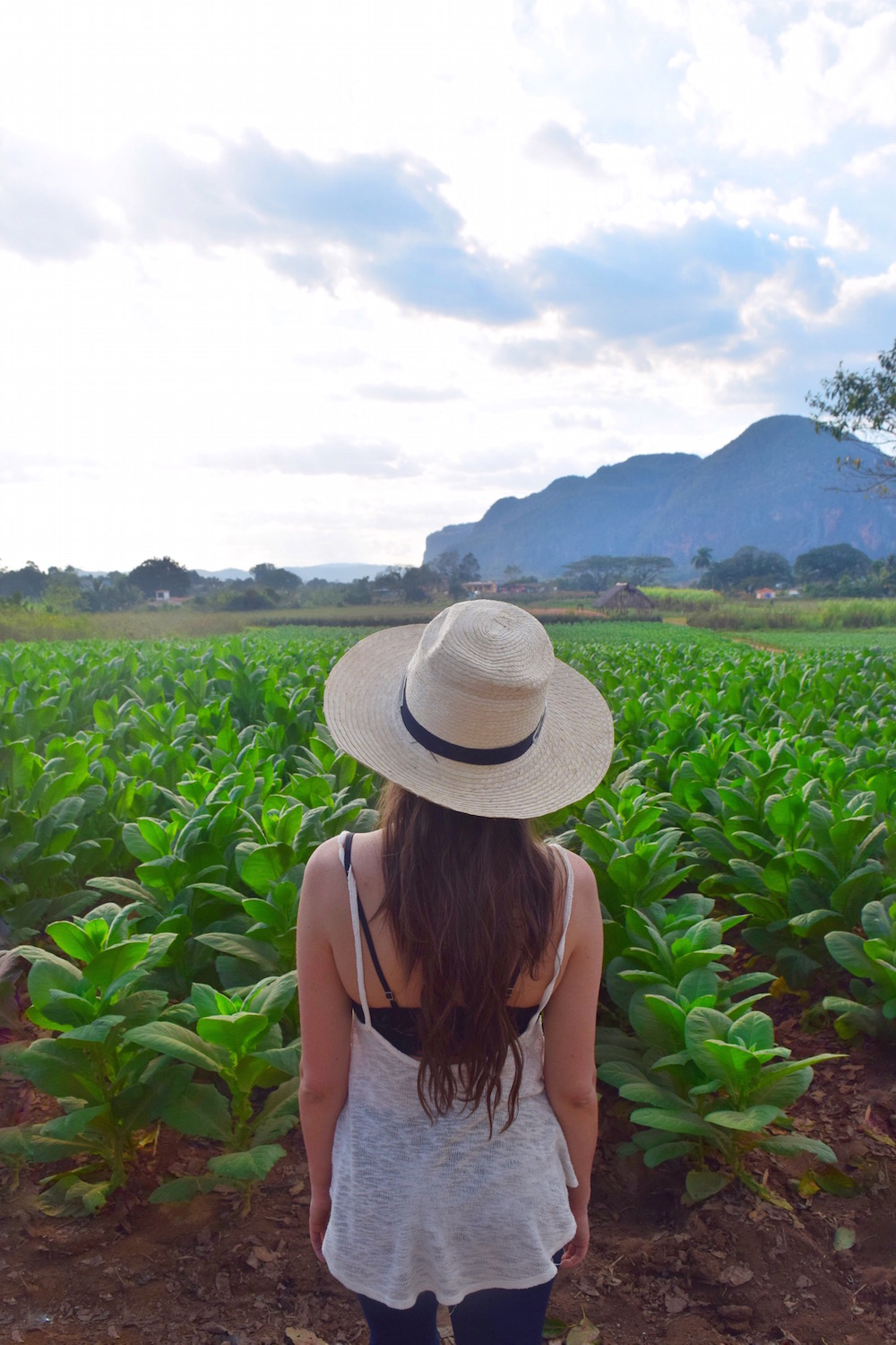 visiting tobacco farm vinales