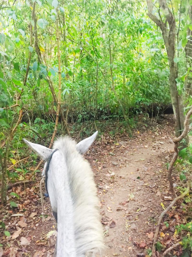 Horseback riding while bird watching at Rafiki Safari Lodge Costa Rica