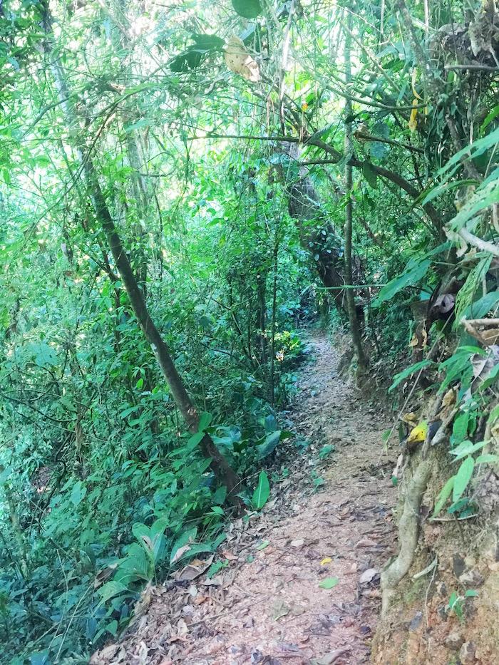 Trail at Rafiki Safari Lodge Costa Rica