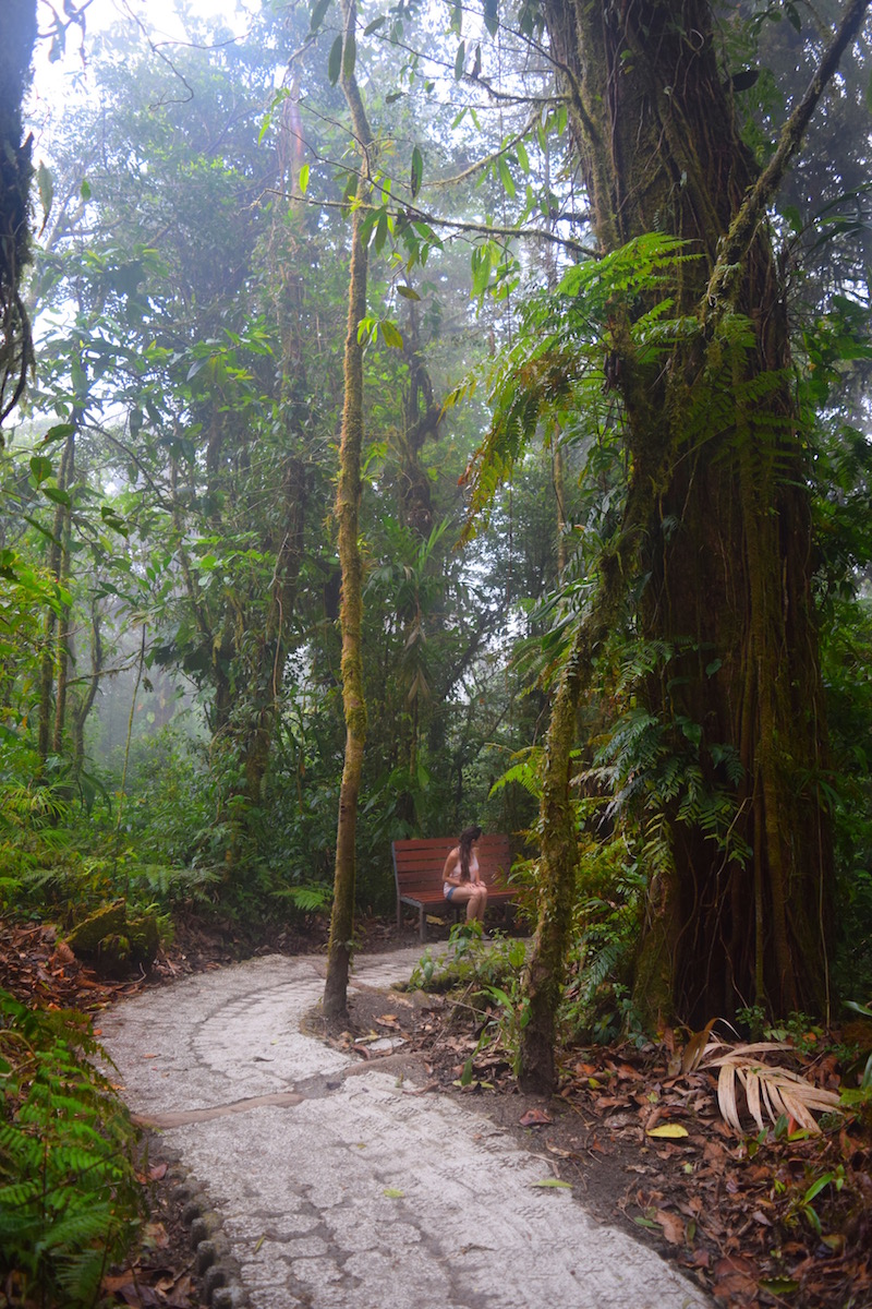 how to get to the monteverde cloud forest