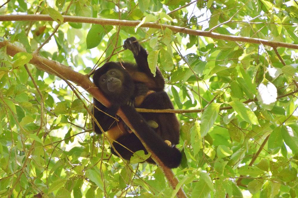 costa-rica-animals-monkey-baby.jpg