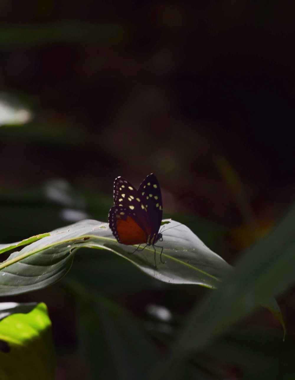 costa-rica-animals-insects-butterfly.jpg