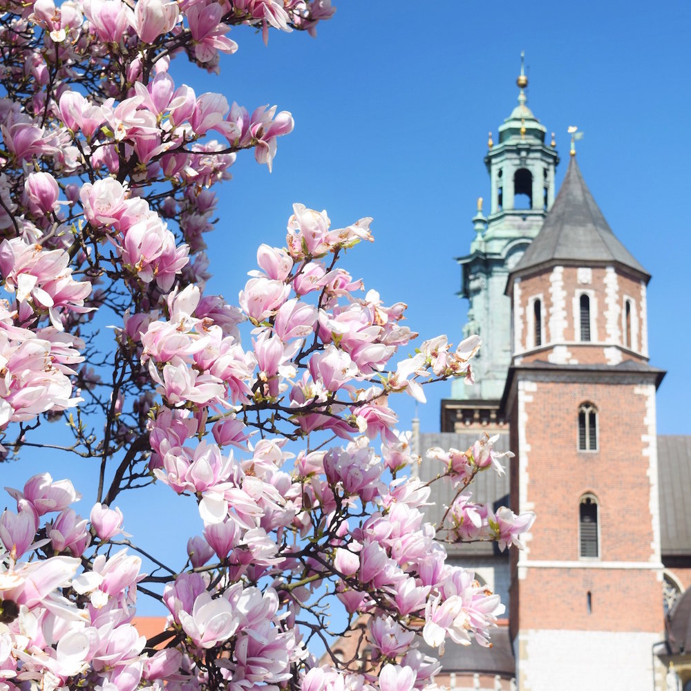 Top things to do in Krakow Poland - visit Wawel hill and see the gorgeous cathedral and castle. Tessa Juliette www.travelwheretonext.com