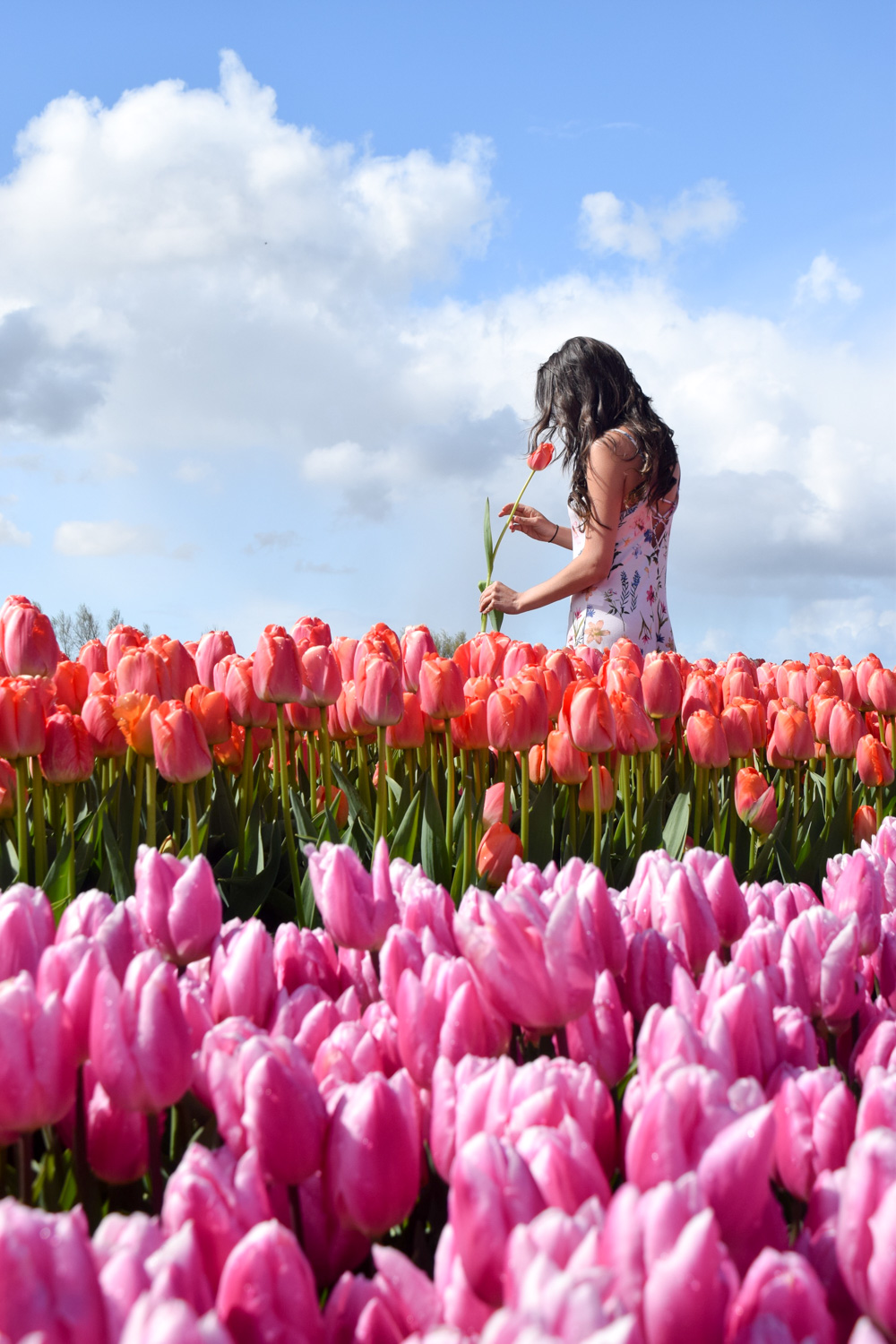 Where to see tulips in Amsterdam