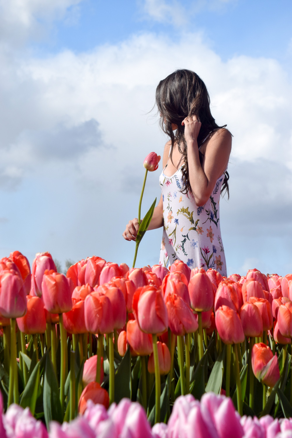 best way to see tulips in amsterdam