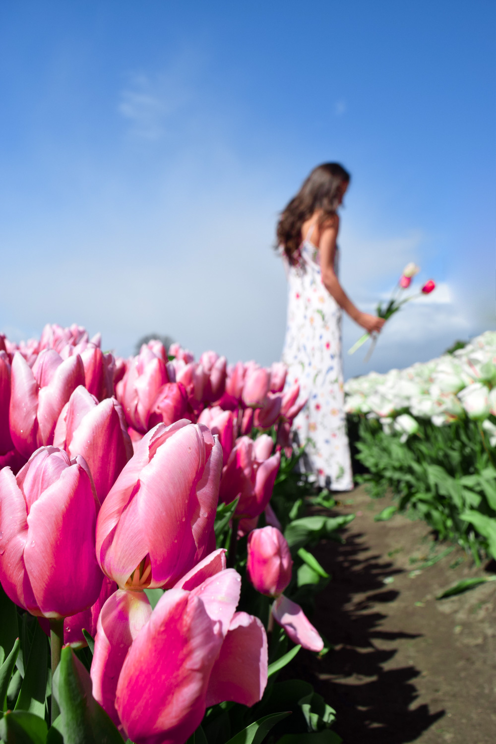 instagram pictures of tulips amsterdam