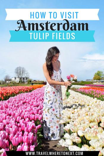 The best guide for visiting the Tulip Fields outside Amsterdam. This is a once and a lifetime bucket-list experience.  PIN NOW READ LATER  Tessa Juliette http://travelwheretonext.com