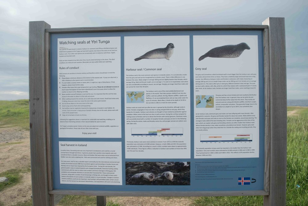 Where to see seals in Iceland.