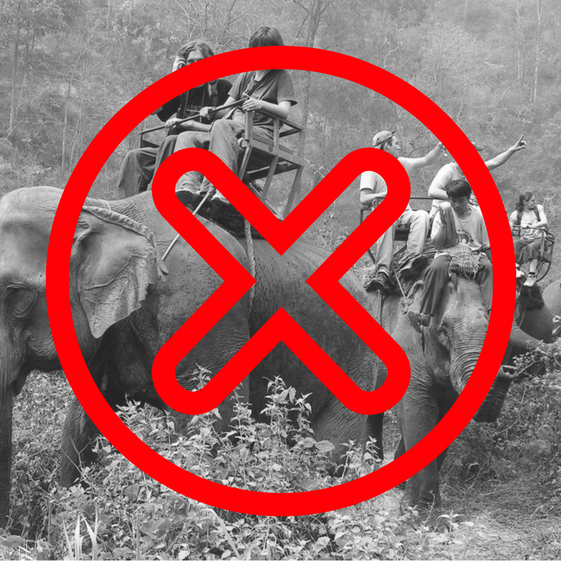 Please Dont Ride Elephants In Thailand Where To Next Budget