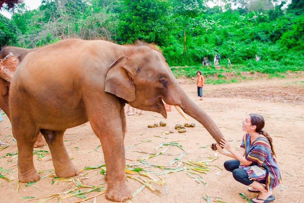 Chiang-Mai-Elephant-Tour-63.jpg