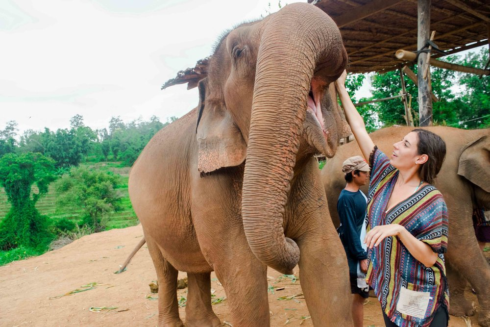 Never ride elephants in Thailand - instead visit an elephant sanctuary