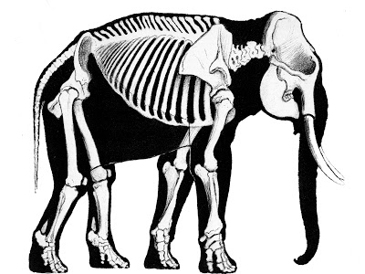 Elephant Spine