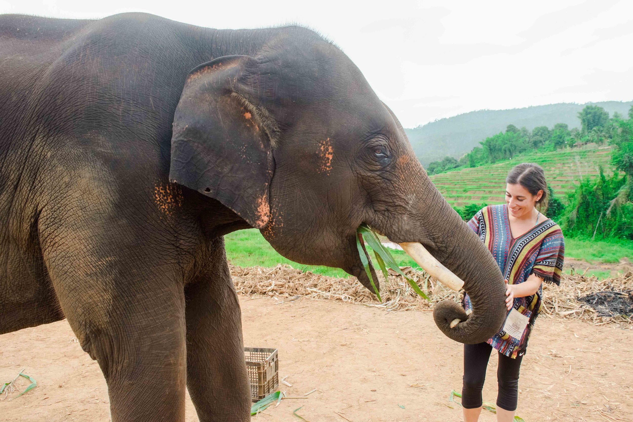 Elephant Nature Park Day Tour From Bangkok