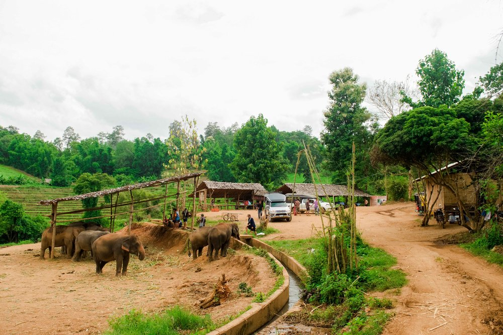 Entering elephant nature park in Chiang Mai Thailand