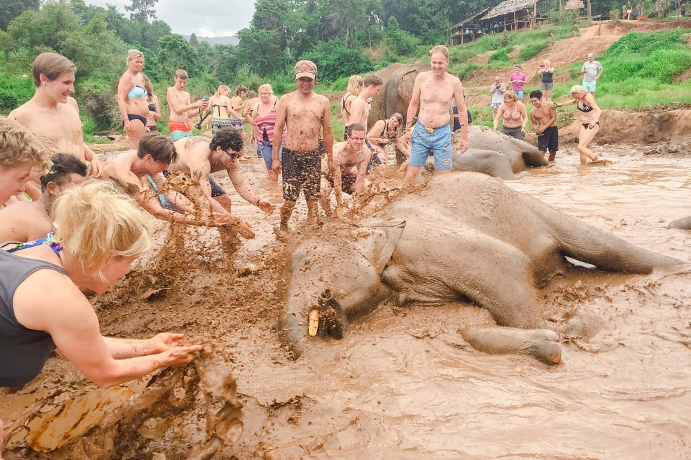 Bathing with elephants in Elephant Nature park in Chiang Mai