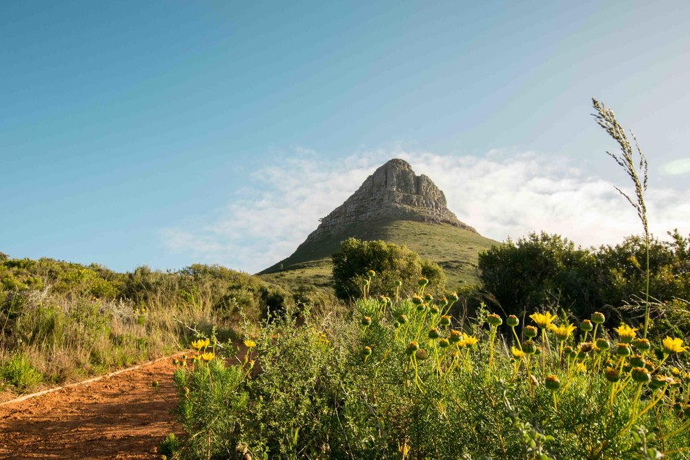 Hiking Lions head is one of the best things to do while in Cape Town
