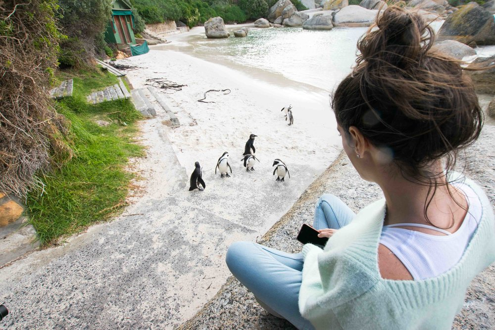 One of the best, and most memorable, things to do in Cape Town South Africa is hang out with WILD penguins.