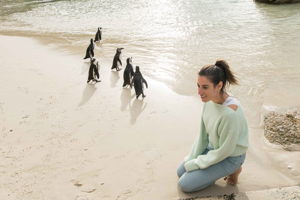 How close can you get to the penguins in south africa?