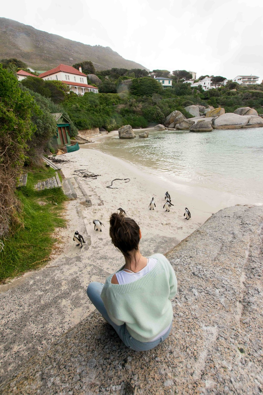 Penguins in South Africa