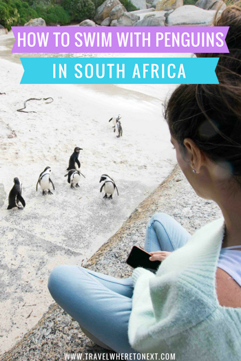 When heading to South Africa (and specifically Cape Town) you do not want to miss swimming with penguins.