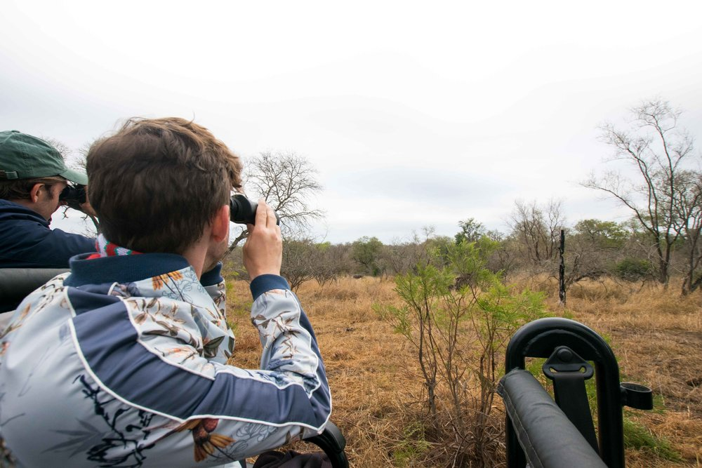 Looking for animals in Kruger National Park