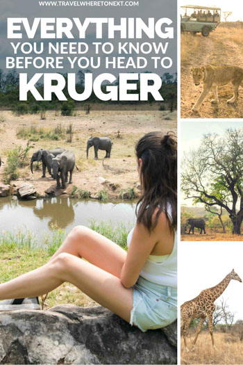Want to plan an epic trip to Kruger National Park? Read on to find the answers to all your questions!
