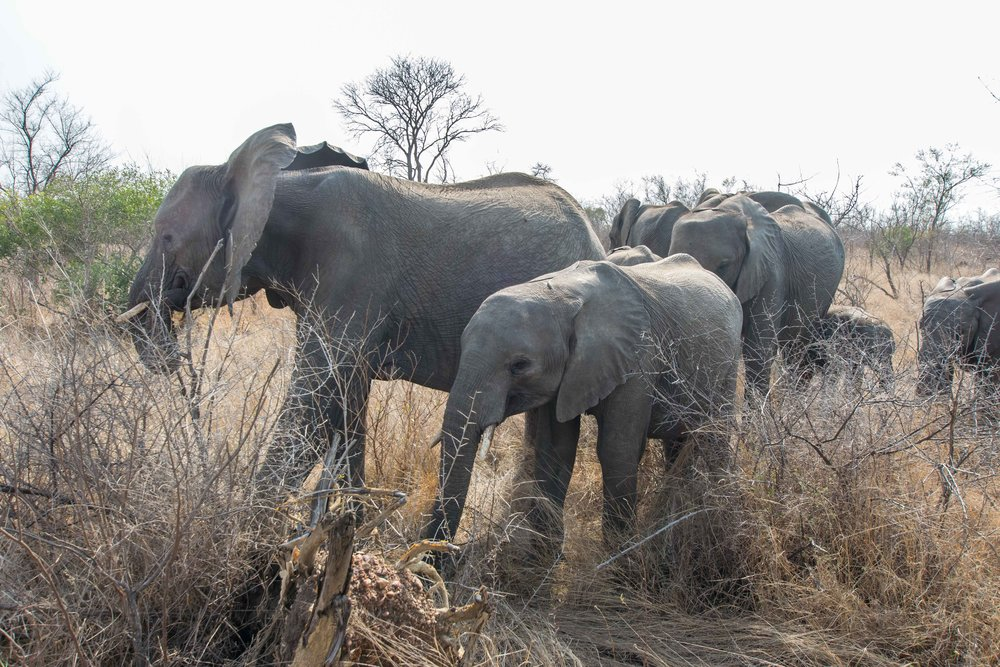 Elephants ridiculusly close to us
